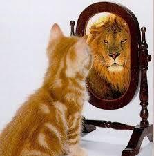 Buttercup the lion